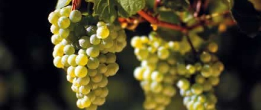 The Weekly Wine: Hot And Dry And Cool And Fresh