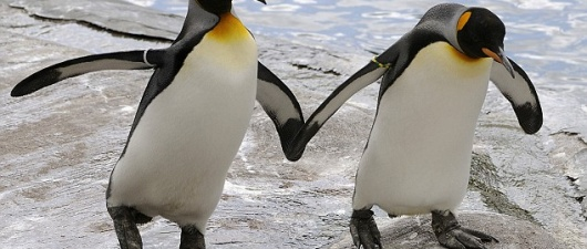 Forced Split of 'Gay Penguins' Impending